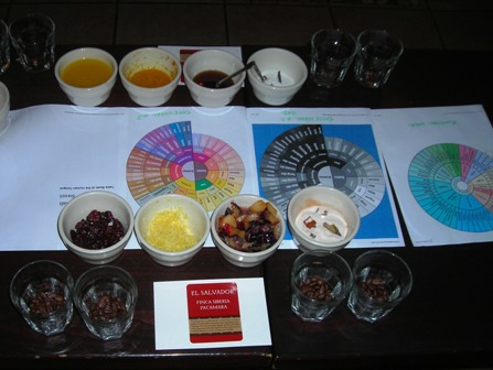 cupping-pacamara-and-la-minita.jpg